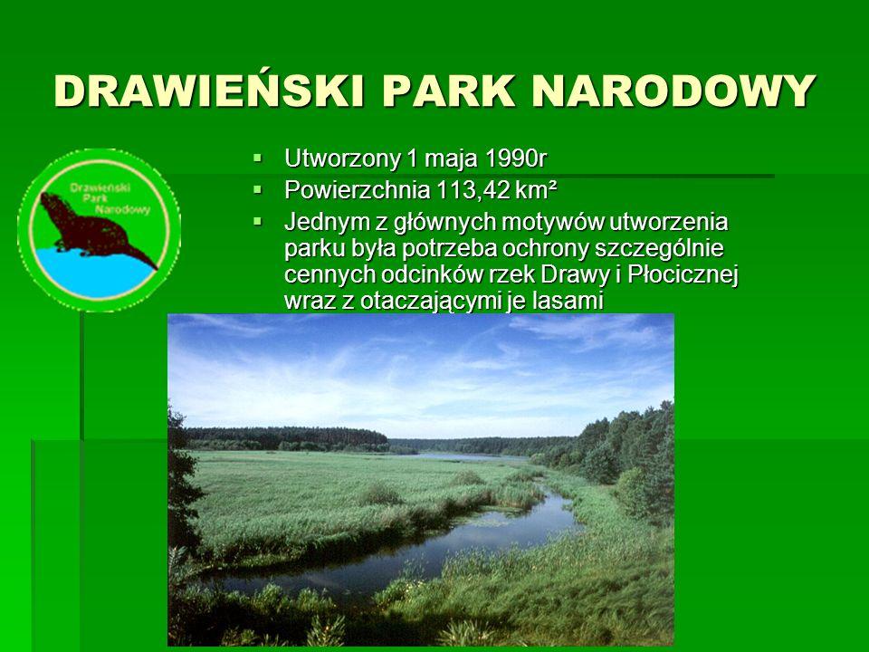 PARK NARODOWY BORY TUCHOLSKIE  utworzony w 1996 r  Powierzchnia 4789 ha  Park obejmuje część Zaborskiego Parku Krajobrazowego, utworzonego w 1990 roku dla zachowania wybitnych walorów przyrodniczych i kulturowych południowej części Kaszub zwanej Ziemią Zaborską