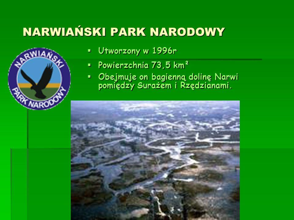MAGURSKI PARK NARODOWY MAGURSKI PARK NARODOWY  Utworzony w 1995r  Powierzchnia 194,39 km²  Magurski Park Narodowy został zgłoszony do Komisji Europejskiej jako specjalny obszar ochrony siedlisk o nazwie Ostoja Magurska