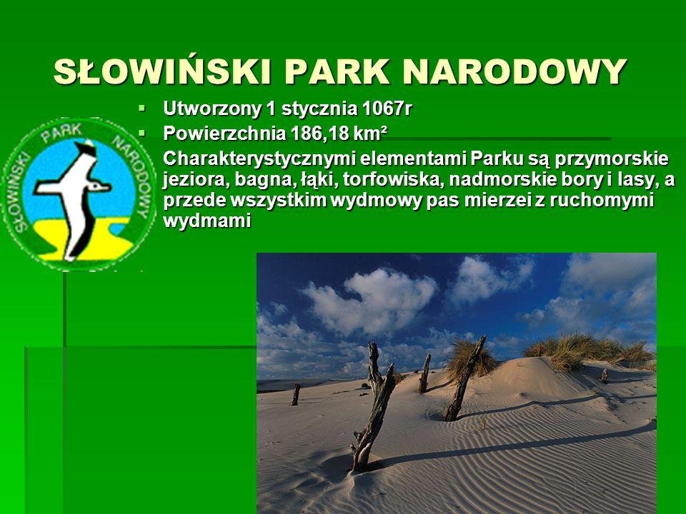 ROZTOCZAŃSKI PARK NARODOWY ROZTOCZAŃSKI PARK NARODOWY  Utworzony w 1974r  Powierzchnia 84,83 km²  Obejmuje najcenniejsze przyrodniczo obszary Roztocza Środkowego w dolinie górnego Wieprza.