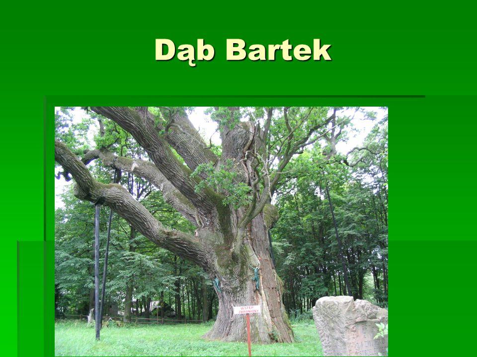 ŚWIĘTOKRZYSKI PARK NARODOWY  Utworzony w 1950r  Powierzchnia 76,26 km²  Największą osobliwością parku są gołoborza