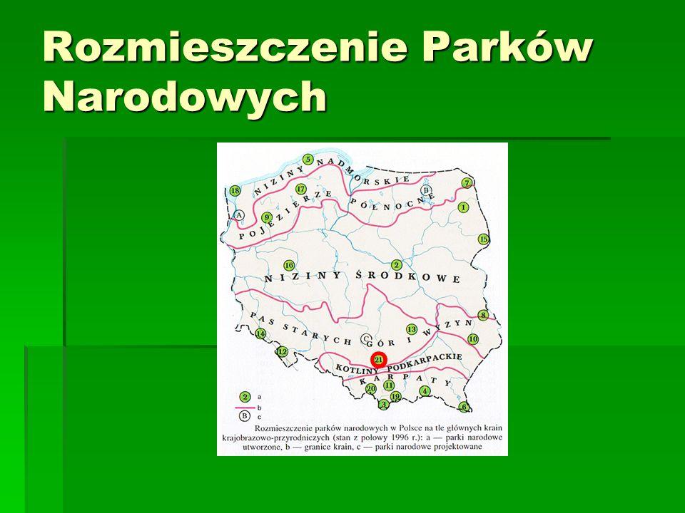 GORCZAŃSKI PARK NARODOWY  Utworzony w 1981r  Powierzchnia 70,3 km²  salamandra plamista uznana została za symbol Gorczańskiego Parku Narodowego