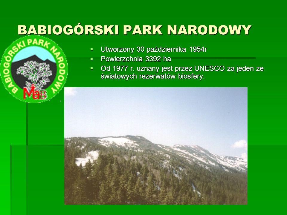 KAMPINOSKI PARK NARODOWY KAMPINOSKI PARK NARODOWY  Utworzony w 1959r  Powierzchnia 385,44 km²  Został uznany przez UNESCO za rezerwat biosfery  Wydmy i obszary bagienne są najbardziej charakterystycznymi elementami tutejszego krajobrazu
