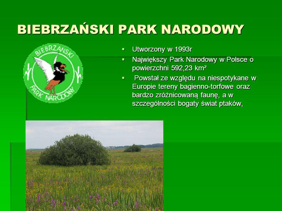 BIEBRZAŃSKI PARK NARODOWY  Utworzony w 1993r  Największy Park Narodowy w Polsce o powierzchni 592,23 km²  Powstał ze względu na niespotykane w Europie tereny bagienno-torfowe oraz bardzo zróżnicowaną faunę, a w szczególności bogaty świat ptaków,