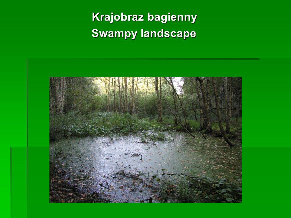 Krajobraz bagienny Krajobraz bagienny Swampy landscape Swampy landscape