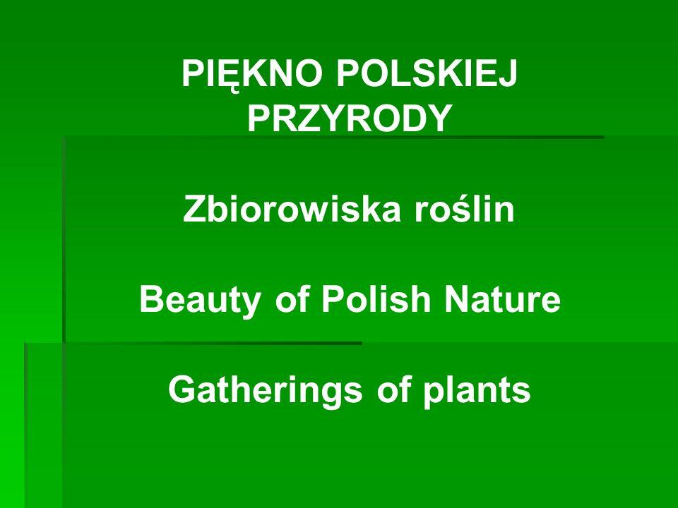 PIĘKNO POLSKIEJ PRZYRODY Zbiorowiska roślin Beauty of Polish Nature Gatherings of plants