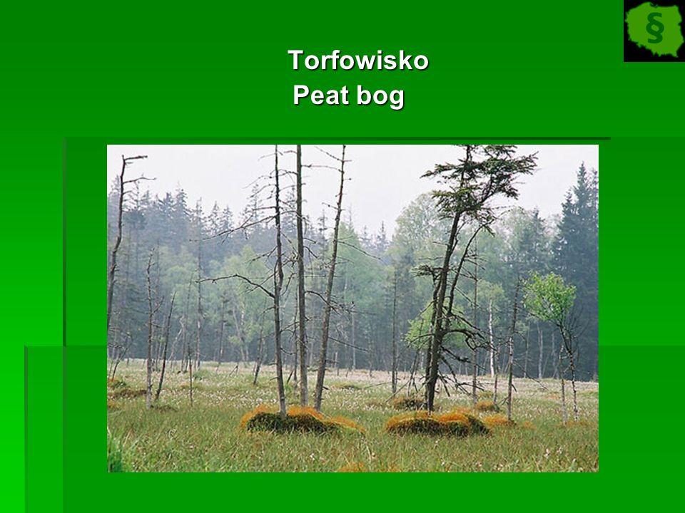 Torfowisko Torfowisko Peat bog