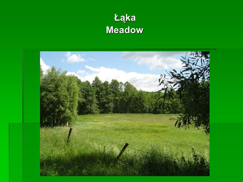 Łąka Łąka Meadow Meadow