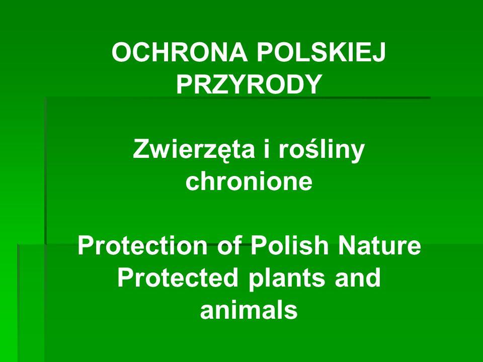 OCHRONA POLSKIEJ PRZYRODY Zwierzęta i rośliny chronione Protection of Polish Nature Protected plants and animals