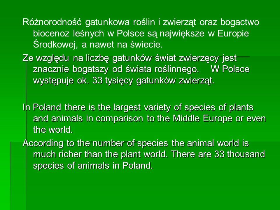 Różnorodność gatunkowa roślin i zwierząt oraz bogactwo biocenoz leśnych w Polsce są największe w Europie Środkowej, a nawet na świecie. Ze względu na
