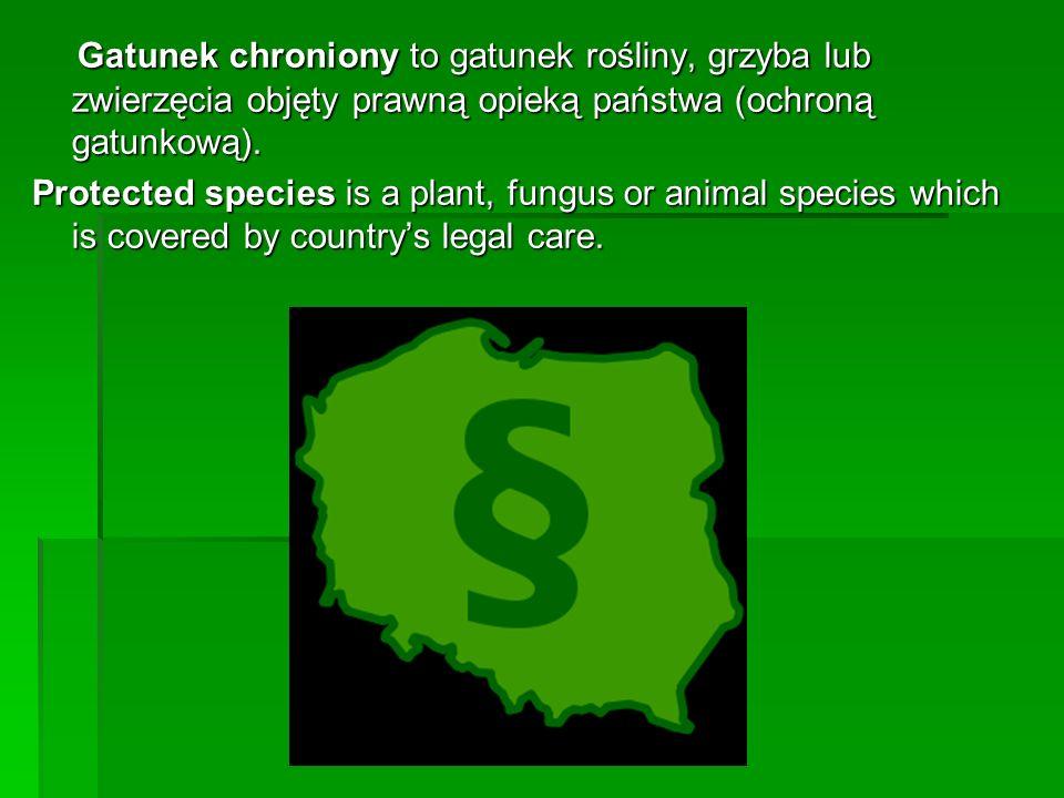 Gatunek chroniony to gatunek rośliny, grzyba lub zwierzęcia objęty prawną opieką państwa (ochroną gatunkową). Gatunek chroniony to gatunek rośliny, gr