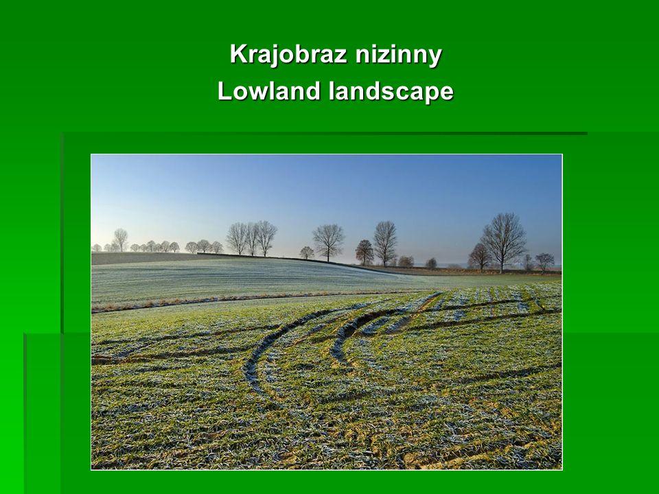 Krajobraz nizinny Lowland landscape