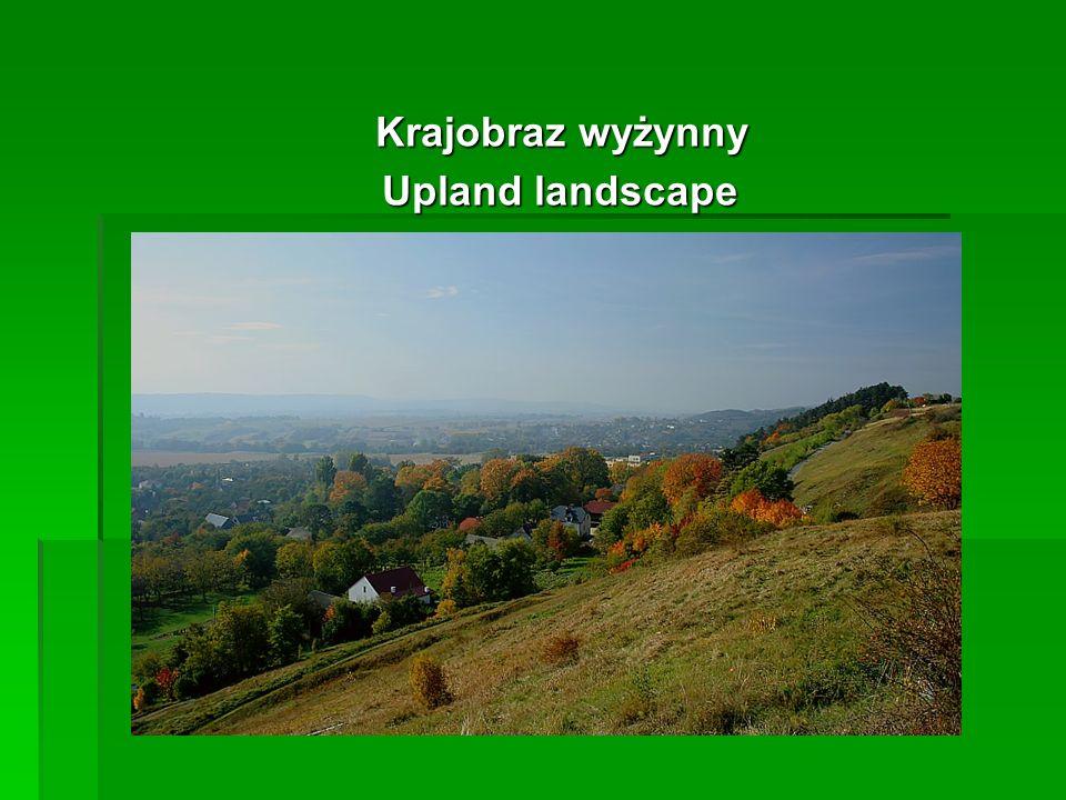 Krajobraz wyżynny Krajobraz wyżynny Upland landscape Upland landscape