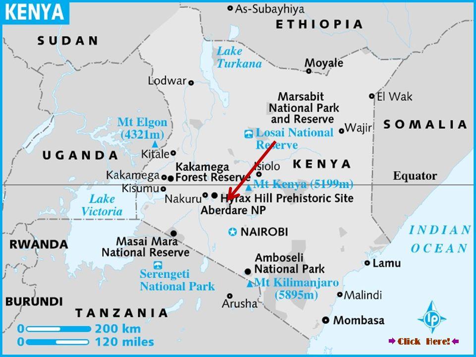 Kenia, Centralna Prowincja, niedaleko miasta Nyeri