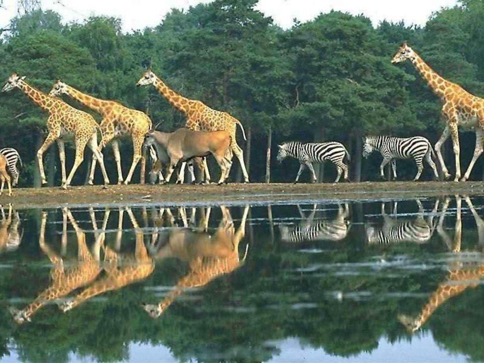 Z tarasu hotelu można obserwować dzikie zwierzęta