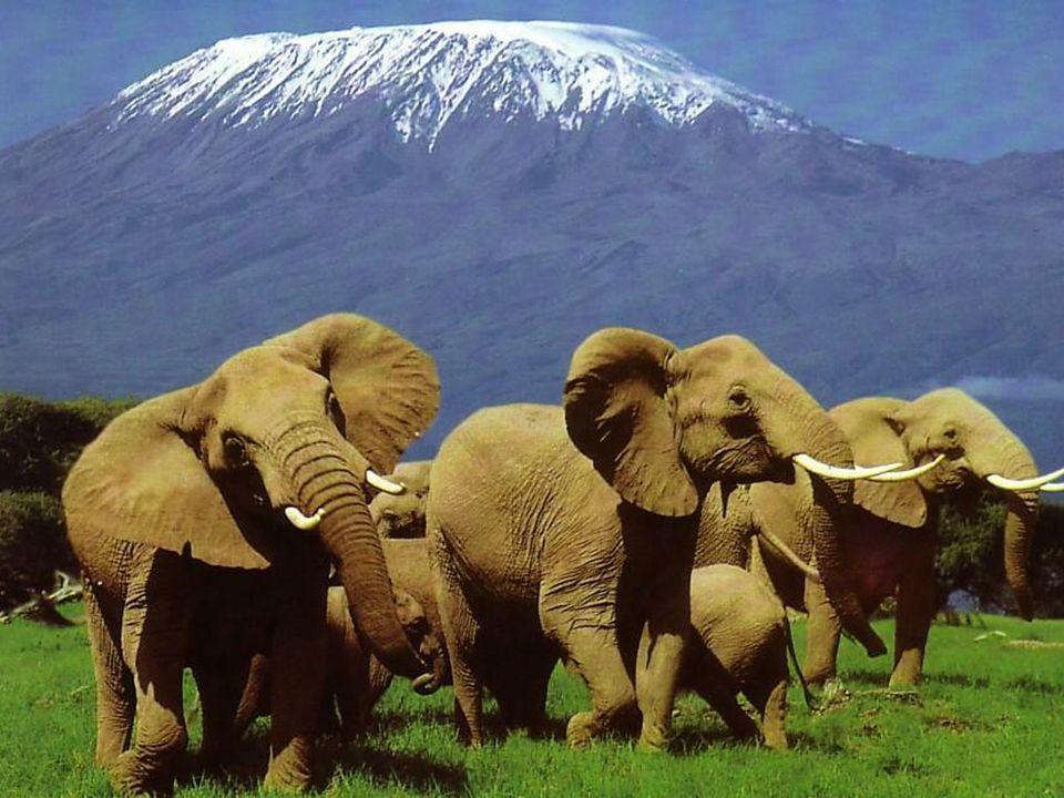 Nietypowa roślinność, chropowaty teren oraz strumienie i wodospady sprawiają, że jest to jeden z najpiękniejszych parków w Kenii.