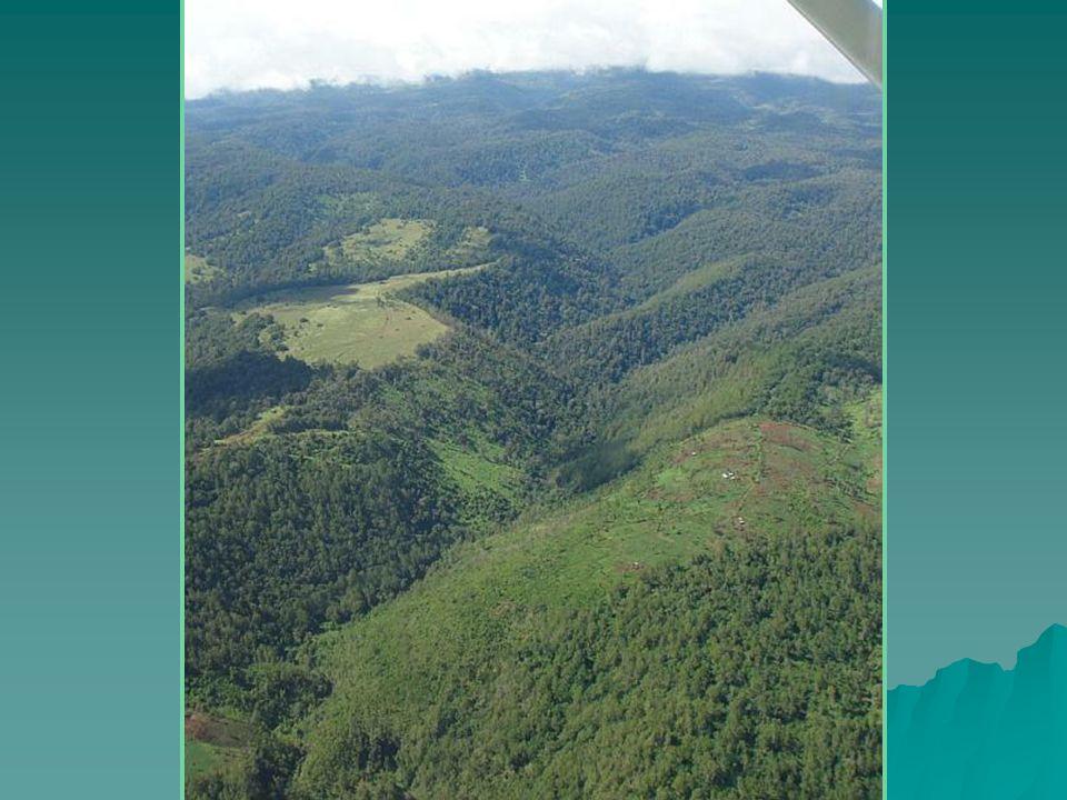Krajobraz na północ od Nairobi, u podnóża pasma górskiego Aberdare. (