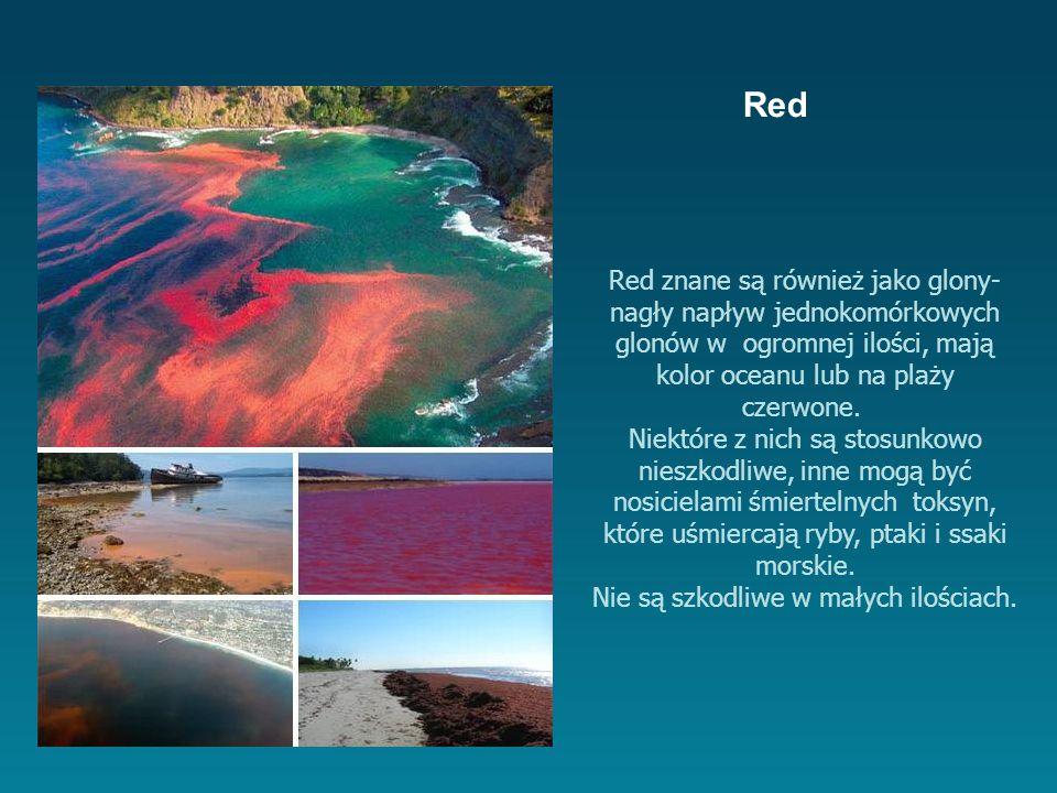 Red znane są również jako glony- nagły napływ jednokomórkowych glonów w ogromnej ilości, mają kolor oceanu lub na plaży czerwone.