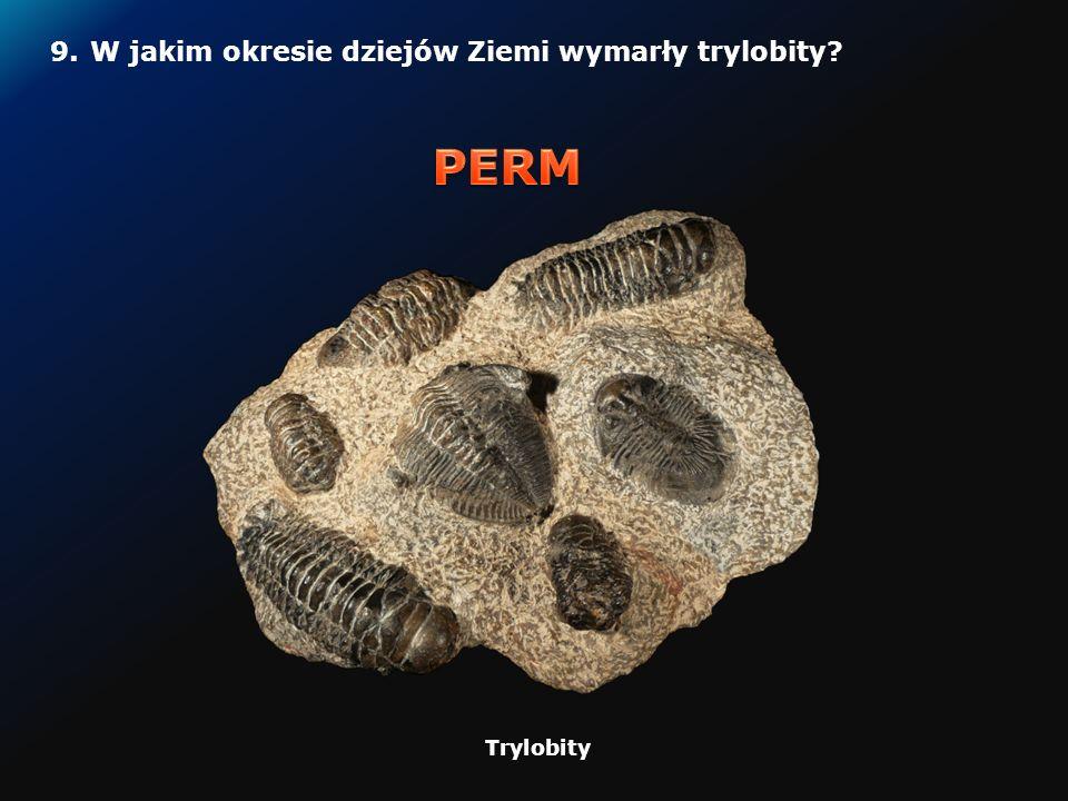 8.W jakim okresie dziejów Ziemi pojawiły się pierwsze ssaki.