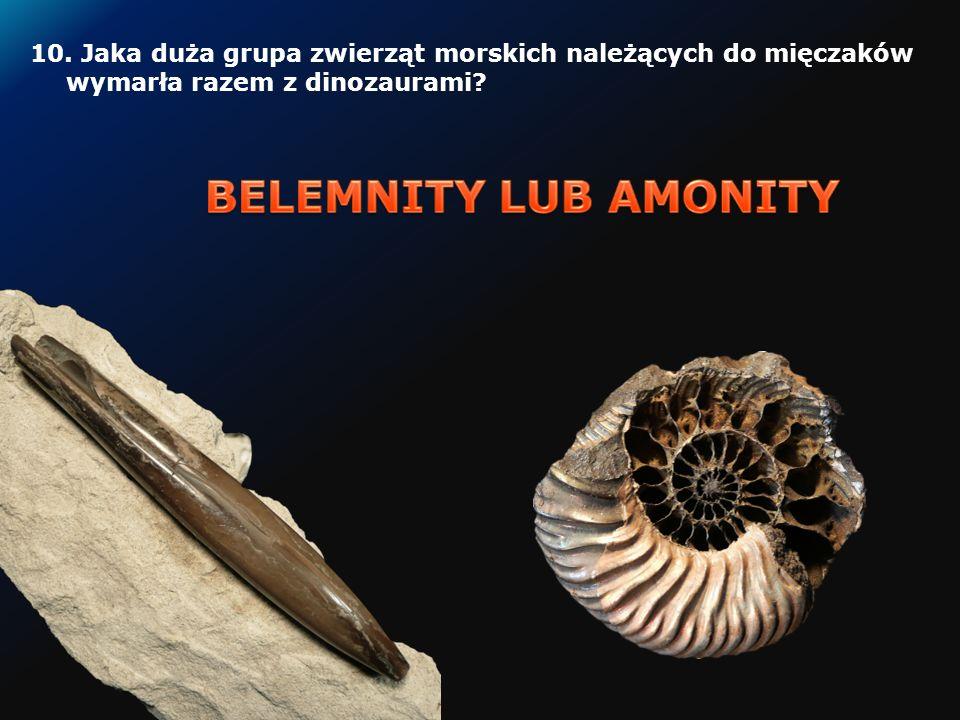 10.Jaka duża grupa zwierząt morskich należących do mięczaków wymarła razem z dinozaurami?