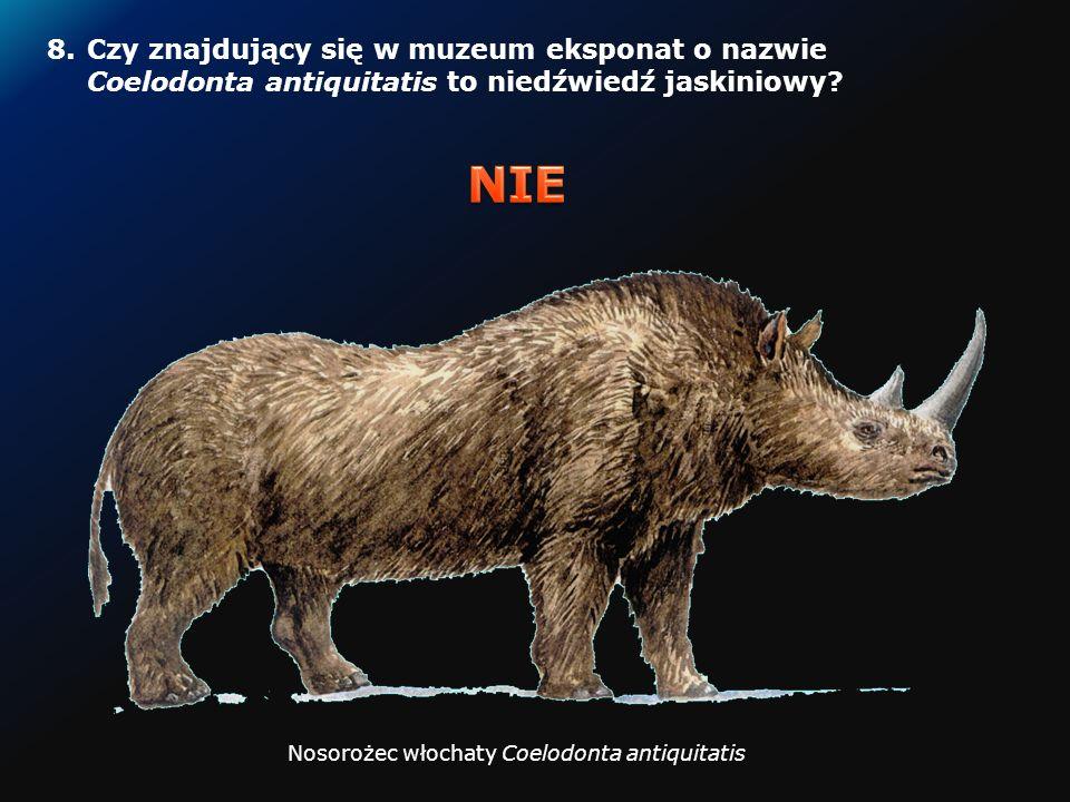 7.Czy nunataki to ujemne formy morfologiczne? Nunataki na wschodnim wybrzeżu Grenlandii Fot. M. Haferkamp http://pl.wikipedia.org/wiki/Nunatak