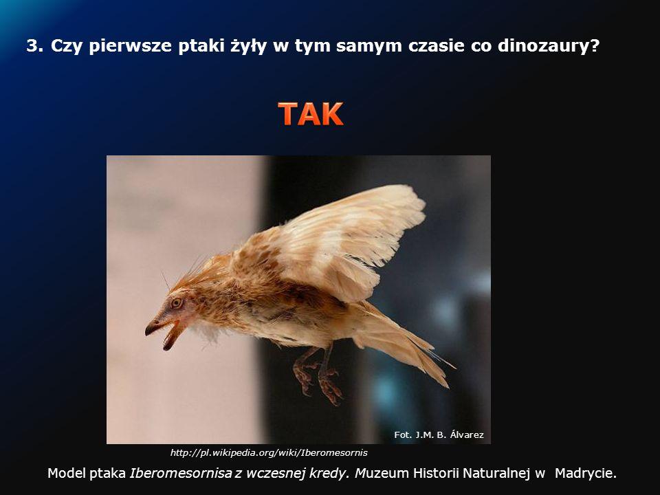 2.Czy niektóre ssaki potrafią latać?