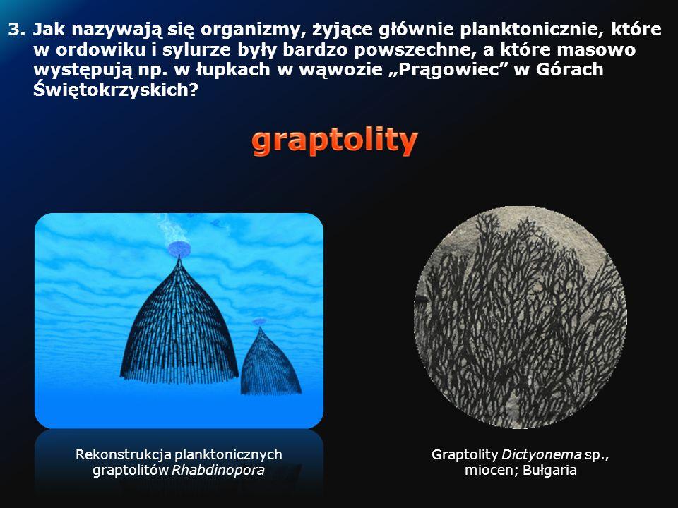 2.Jak nazywa się miejscowość w Polsce, w której znaleziono skamieniałości archozaura – Silezaura i innych gadów i płazów?