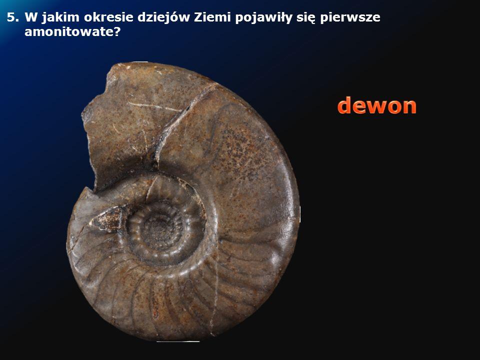 Rekonstrukcja pierwszych w historii Ziemi czworonogów, które wyszły na ląd w Górach Świętokrzyskich 4.W Polsce znaleziono tropy najstarszego w świecie czworonoga, który wyszedł na ląd.