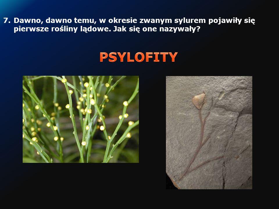 6.W jakim okresie dziejów Ziemi pojawiły się trylobity? Trylobit Andalusiana sp.
