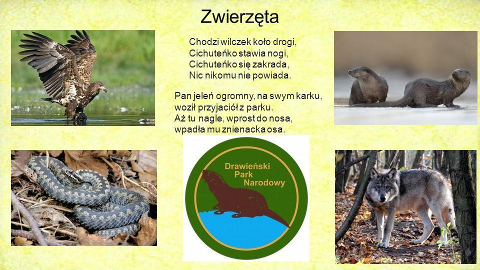 Zwierzęta Jak wiadomo, Nadleśnictwo Drawno jest słynne nie tylko z Drawieńskiego Parku Narodowego, ale również z wielu gatunków zwierząt, które żyją na jego obszarze.