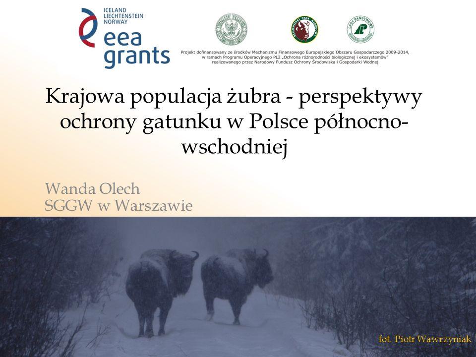 Krajowa populacja żubra - perspektywy ochrony gatunku w Polsce północno- wschodniej Wanda Olech SGGW w Warszawie fot.