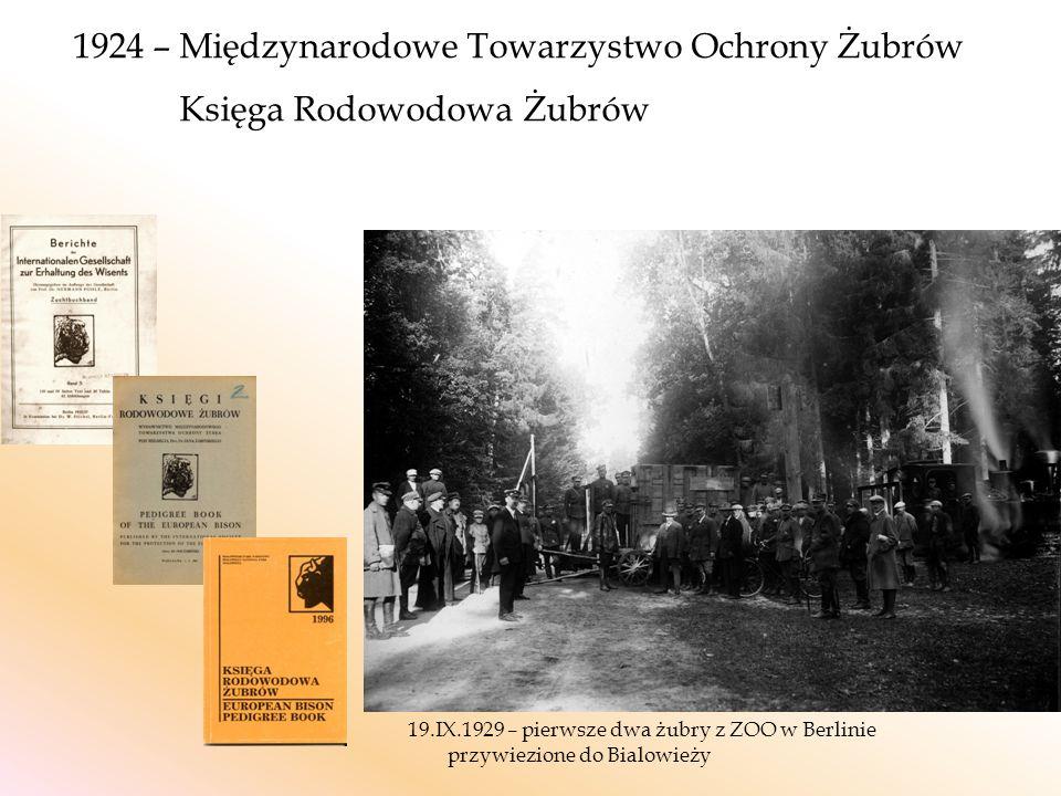 1924 – Międzynarodowe Towarzystwo Ochrony Żubrów Księga Rodowodowa Żubrów 19.IX.1929 – pierwsze dwa żubry z ZOO w Berlinie przywiezione do Bialowieży