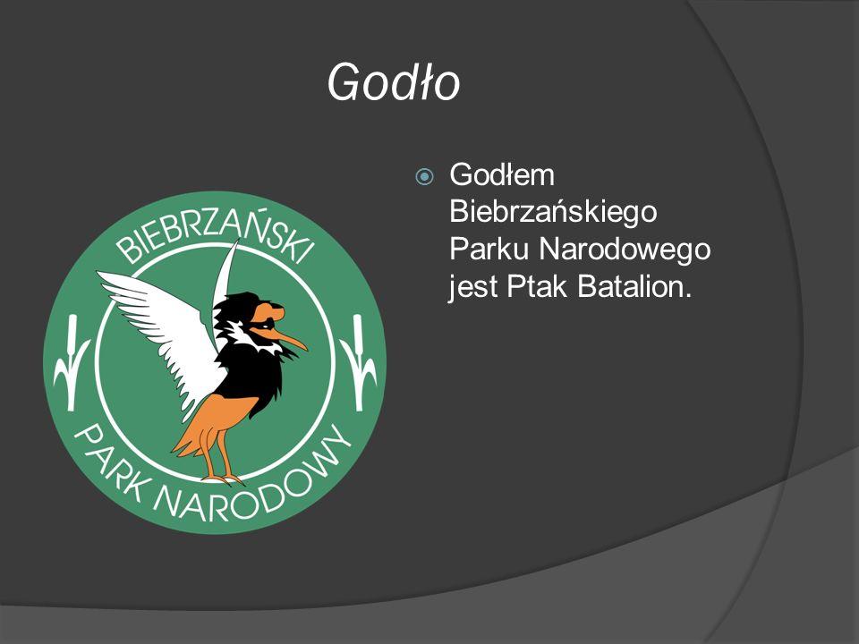 Godło  Godłem Biebrzańskiego Parku Narodowego jest Ptak Batalion.