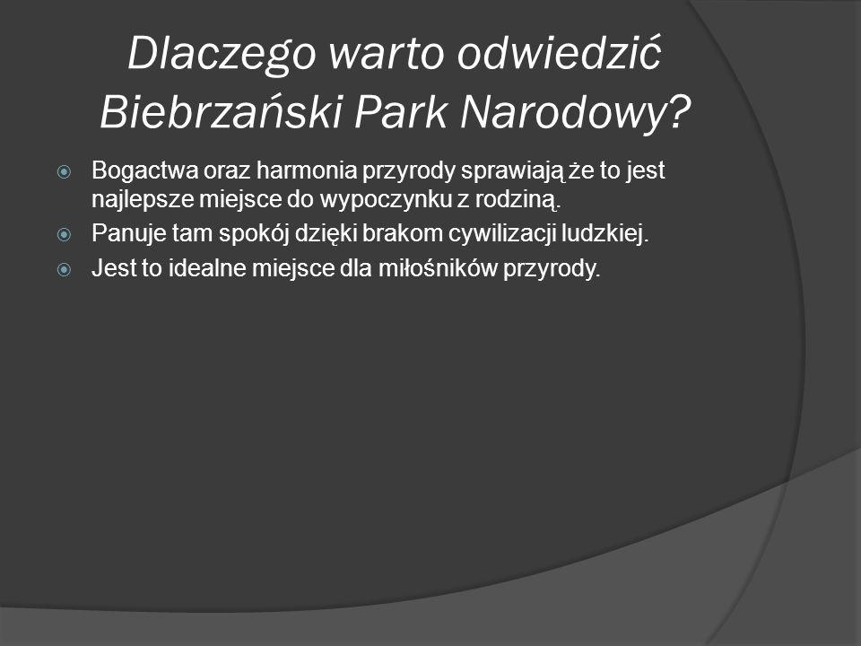 Dlaczego warto odwiedzić Biebrzański Park Narodowy.
