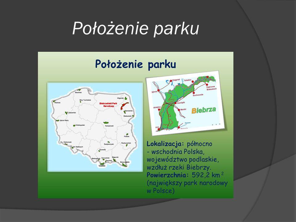 Powierzchnia Parku  Łączna powierzchnia Biebrzańskiego Parku Narodowego wynosi 592,23 km²  Powierzchnia leśna wynosi 155,44 km²  Powierzchnia uprawna wynosi 181,8 km²  Powierzchnia wodna wynosi 8,9 km²