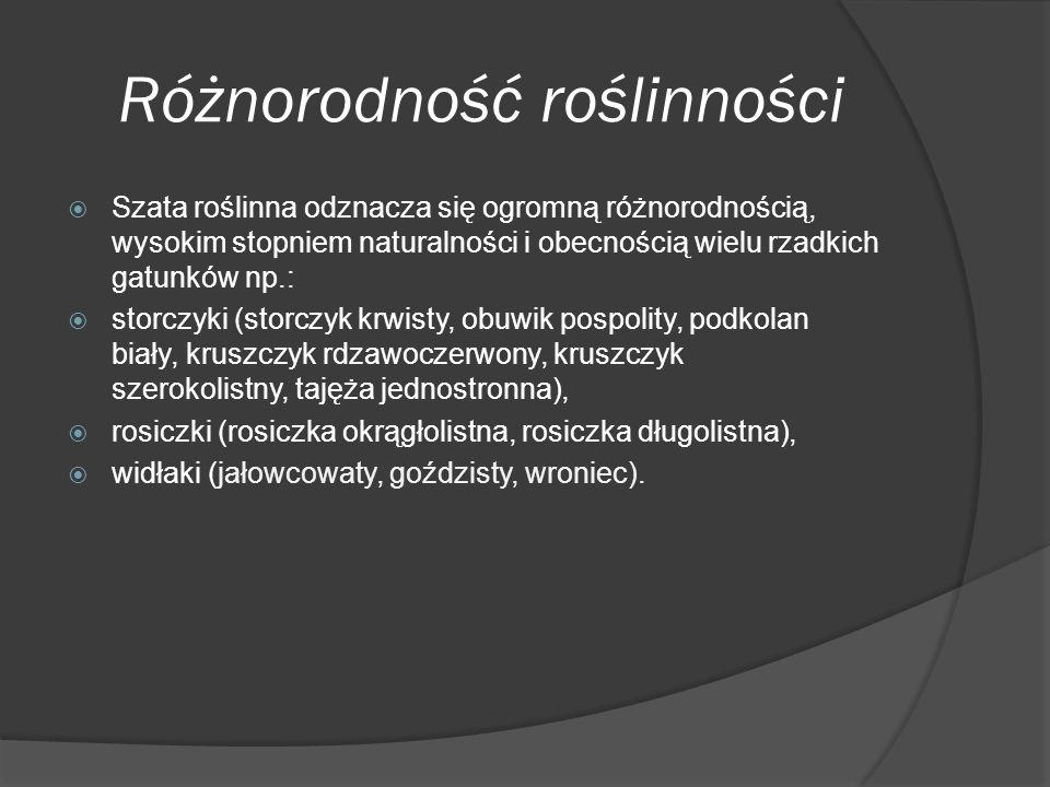 Różnorodność roślinności  Szata roślinna odznacza się ogromną różnorodnością, wysokim stopniem naturalności i obecnością wielu rzadkich gatunków np.:  storczyki (storczyk krwisty, obuwik pospolity, podkolan biały, kruszczyk rdzawoczerwony, kruszczyk szerokolistny, tajęża jednostronna),  rosiczki (rosiczka okrągłolistna, rosiczka długolistna),  widłaki (jałowcowaty, goździsty, wroniec).