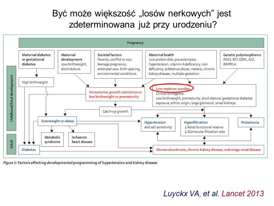 """Luyckx VA, et al. Lancet 2013 Być może większość """"losów nerkowych"""" jest zdeterminowana już przy urodzeniu?"""