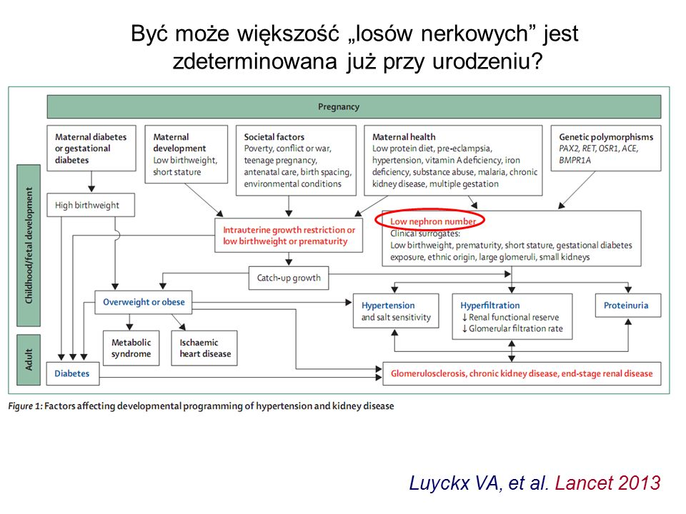 Luyckx VA, et al.