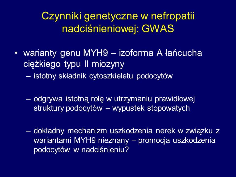Czynniki genetyczne w nefropatii nadciśnieniowej: GWAS warianty genu MYH9 – izoforma A łańcucha ciężkiego typu II miozyny –istotny składnik cytoszkieletu podocytów –odgrywa istotną rolę w utrzymaniu prawidłowej struktury podocytów – wypustek stopowatych –dokładny mechanizm uszkodzenia nerek w związku z wariantami MYH9 nieznany – promocja uszkodzenia podocytów w nadciśnieniu?