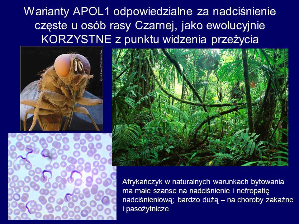 Warianty APOL1 odpowiedzialne za nadciśnienie częste u osób rasy Czarnej, jako ewolucyjnie KORZYSTNE z punktu widzenia przeżycia Afrykańczyk w naturalnych warunkach bytowania ma małe szanse na nadciśnienie i nefropatię nadciśnieniową; bardzo dużą – na choroby zakaźne i pasożytnicze