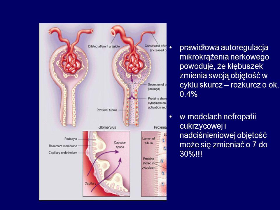 Cykliczny stretching komórek kłębuszka (śródbłonka, mezangialnych, podocytów) prowadzi do: aktywacji osi RAA wzrostu syntezy TGFβ i TGFβ R I, II i III, CTGF wzrostu syntezy VEGF, zwiększającej przepuszczalność kapilar kłębuszkowych i prowadzącej do białkomoczu aktywacji szeregu kinaz białkowych, w tym m.in.