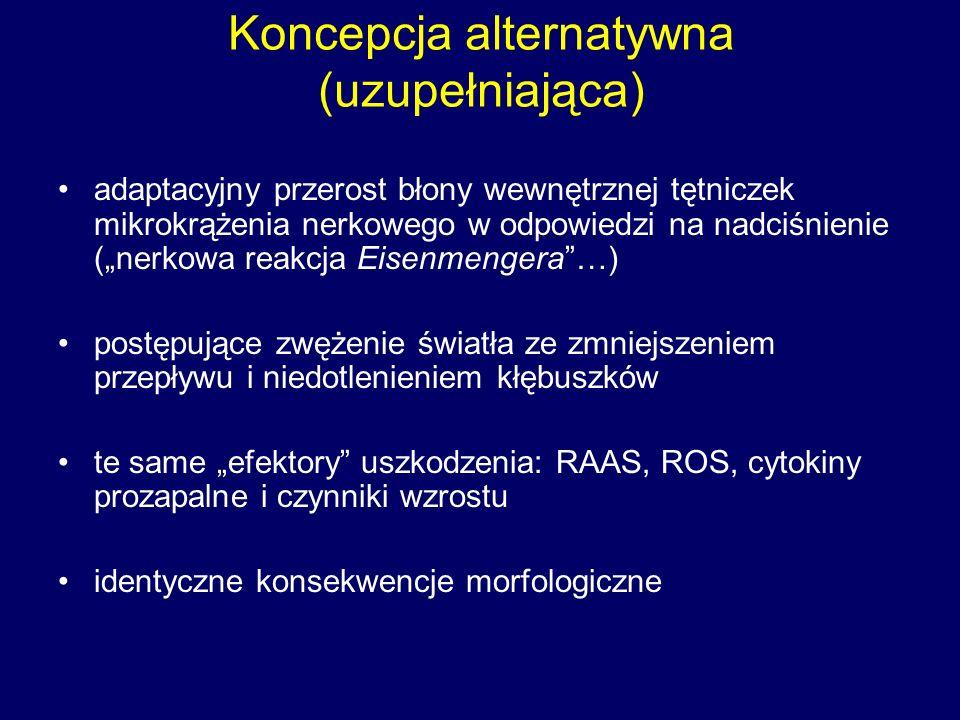 """Koncepcja alternatywna (uzupełniająca) adaptacyjny przerost błony wewnętrznej tętniczek mikrokrążenia nerkowego w odpowiedzi na nadciśnienie (""""nerkowa reakcja Eisenmengera …) postępujące zwężenie światła ze zmniejszeniem przepływu i niedotlenieniem kłębuszków te same """"efektory uszkodzenia: RAAS, ROS, cytokiny prozapalne i czynniki wzrostu identyczne konsekwencje morfologiczne"""