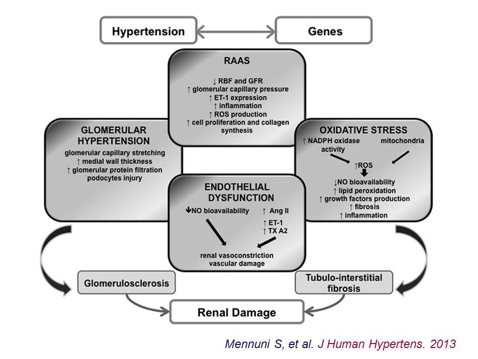 Czynniki genetyczne w nefropatii nadciśnieniowej: GWAS korelacje pomiędzy wariantami genów UMOD, MUH9 i APOL1 oraz podatnością na uszkodzenie nerek i progresją uszkodzenia u chorych rasy Czarnej; brak lub słabe korelacje u osób innych ras warianty genu APOL1 odpowiedzialne za nadciśnienie warunkują także odporność na zakażenie świdrowcami (Trypanosoma)