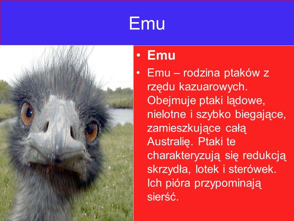 Emu Emu – rodzina ptaków z rzędu kazuarowych.