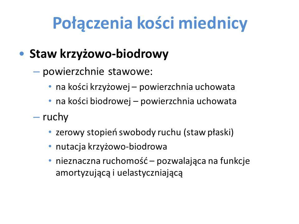 Połączenia kości miednicy Staw krzyżowo-biodrowy (c.d.) – więzadła: w.