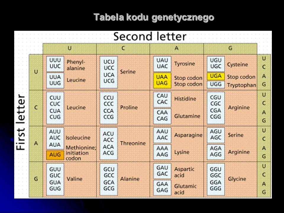Tabela kodu genetycznego Tabela kodu genetycznego