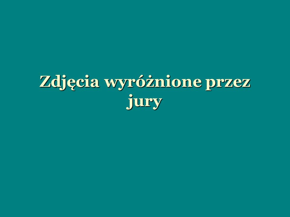 Zdjęcia wyróżnione przez jury