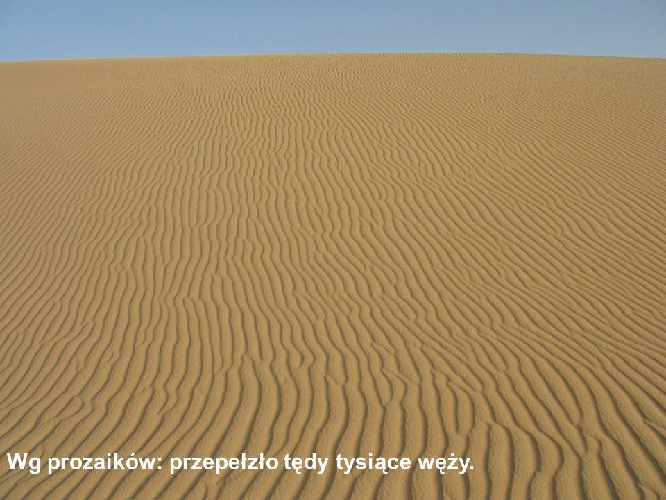 Na koronie wzniesienia tylko marne łachy piasku