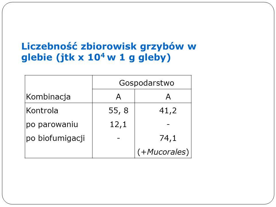 Kombinacja Gospodarstwo AA Kontrola po parowaniu po biofumigacji 55, 8 12,1 - 41,2 - 74,1 (+Mucorales) Liczebność zbiorowisk grzybów w glebie (jtk x 10 4 w 1 g gleby)