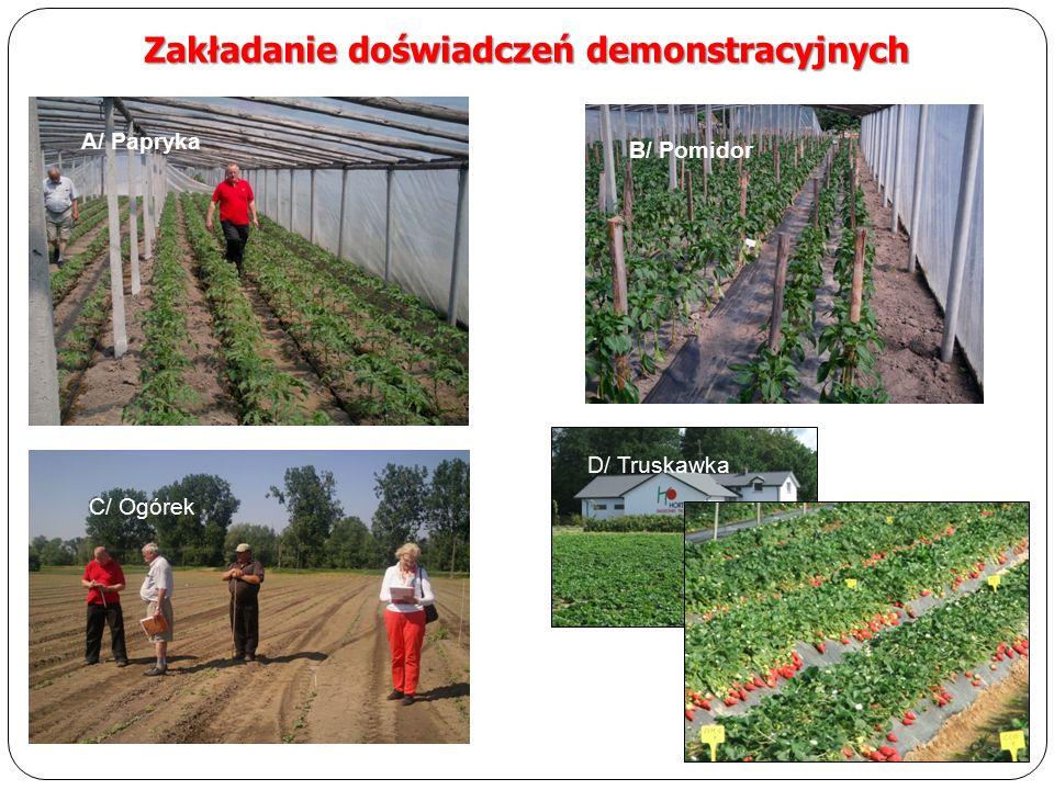 Zakładanie doświadczeń demonstracyjnych A/ Papryka B/ Pomidor C/ Ogórek D/ Truskawka