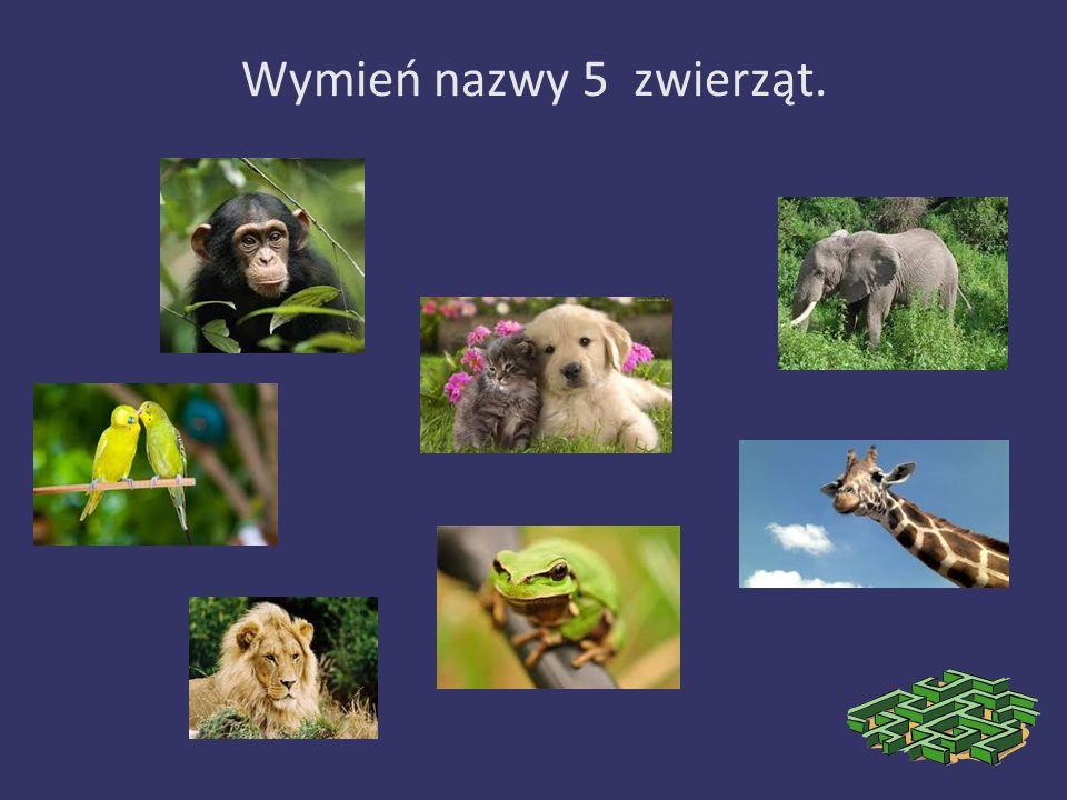 Wymień nazwy 5 zwierząt.